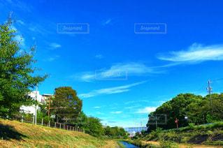 風景,秋,緑,雲,青空,青,堤防,川辺,川,秋空