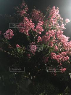 花,夏,屋外,夕暮れ