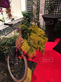 花,自転車,ミモザ,お出かけ