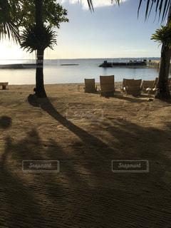 空,朝日,砂,ビーチ,海辺,樹木,セブ島