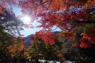 風景,秋,紅葉,愛知,香嵐渓