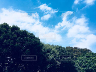 空,雲,秋空,根岸公園