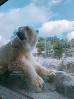 青空,子供,動物園,秋空,お出かけ,ホッキョクグマ,クマ,イベント・行事