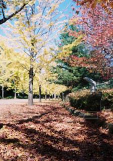 秋,紅葉,落ち葉,並木,イチョウ,銀杏,並木道,埼玉,一休み,カエデ,写真素材,フォトコンテスト,秩父アミューズメントパーク