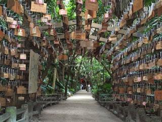 絵馬のトンネル 青島神社の写真・画像素材[1409026]