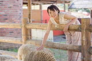 羊をかわいがる女性の写真・画像素材[1594073]