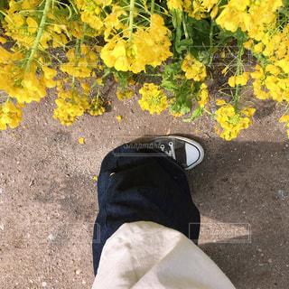 花,春,花畑,黄色,菜の花,女,女子,女の子,イエロー,菜の花畑,スニーカー,カラー,黄,デニム,多彩