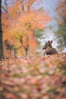 自然の写真・画像素材[2668864]