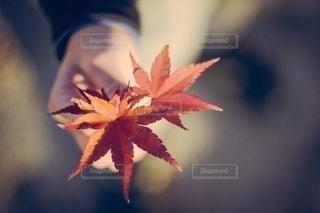 秋の写真・画像素材[2668865]