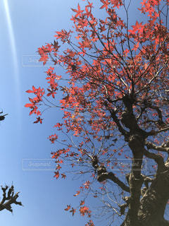 空,樹木,秋空