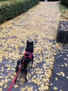 犬,秋,紅葉,山,景色,柴犬