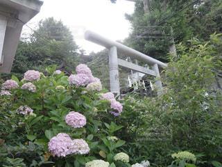 近くのフラワー ガーデンの写真・画像素材[1403833]