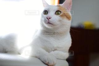 家猫の写真・画像素材[1475564]