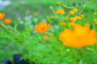 オレンジの写真・画像素材[1505711]