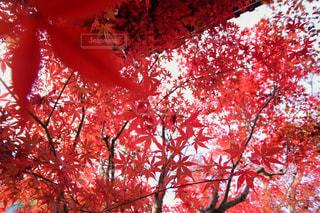 赤の写真・画像素材[1627207]