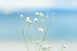 近くの花のアップの写真・画像素材[1672468]