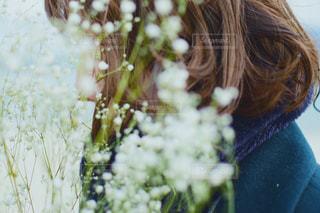 かすみ草の写真・画像素材[1672473]