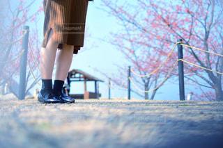 春の写真・画像素材[1799033]