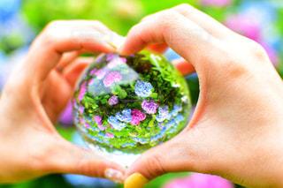 紫陽花の写真・画像素材[2275590]