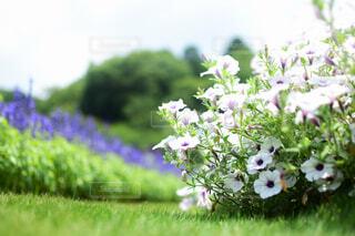 花園のクローズアップの写真・画像素材[4606832]