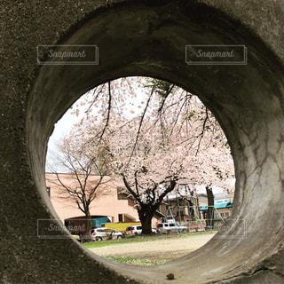 桜の名所に行かなくても…の写真・画像素材[1405078]
