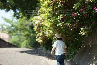 自然,屋外,景色,草,少年,男の子,草木,半袖