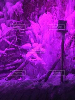 ピンク,秩父,氷柱