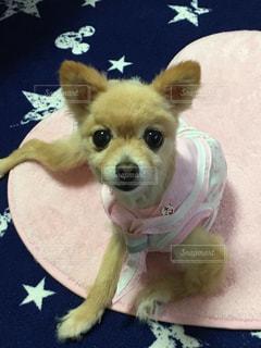 ピンク,セーラー服