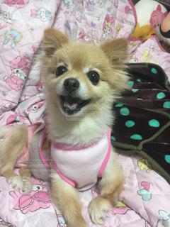 犬,ピンク
