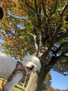 公園,秋,紅葉,赤,青空,オレンジ,秋晴れ,愛犬,お散歩,秋空,きいろ,散歩日和