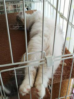 ダラけた猫の写真・画像素材[1626455]