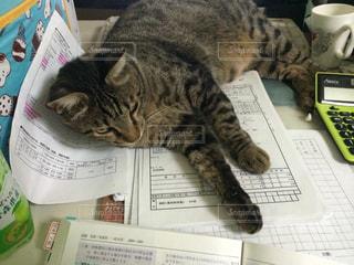 邪魔する猫の写真・画像素材[1720344]