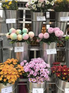 花,ピンク,お花,可愛い,韓国,ピンク色,桃色,pink,花屋,お花屋さん,ホンデ,弘大