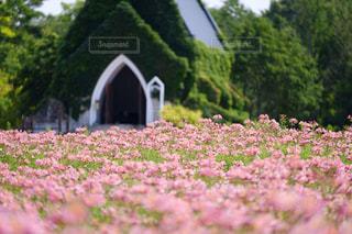 花,夏,ピンク,かわいい,草木,アルストロメリア,ガーデン