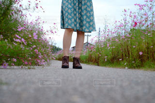 花,秋,ピンク,ワンピース,コスモス,足元,コスモス畑