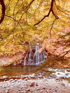 風景,紅葉,赤,青,水,黄色,山,滝,樹木,中野神社,紅葉山