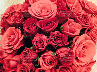 ピンクの花の花束の写真・画像素材[1410089]