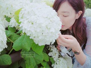 紫陽花の匂いを知っていますか?の写真・画像素材[1413631]