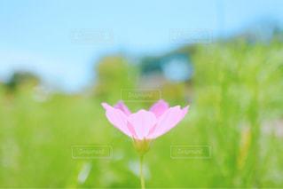 近くの花のアップの写真・画像素材[1467735]