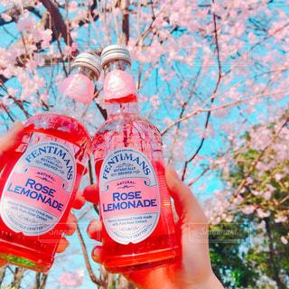 花,春,桜,ピンク,かわいい,レモネード,ピンク色,pink