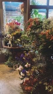 植物部屋の写真・画像素材[2741272]