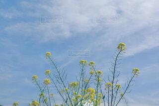 空まで届けの写真・画像素材[4294260]