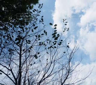 風景,空,秋,雲,秋空