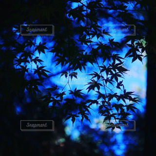 近くの木のアップの写真・画像素材[1639914]