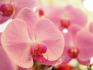 花,ピンク,かわいい,可愛い,はな,お洒落,一眼レフ,一眼,ピンク色,pink,おしゃれ,フォトジェニック,ぴんく,ボケ感,インスタ映え,欄