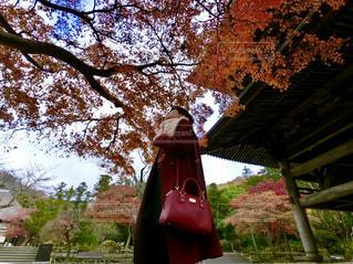 女性,秋,赤,オレンジ,日本,寺,鎌倉,神奈川県