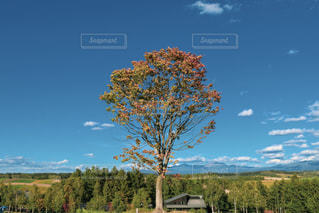 自然,空,紅葉,木,屋外,青空,青,壮大,樹木,地平線,秋空,景観,日中