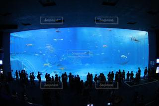バック グラウンドで沖縄美ら海水族館大水槽の写真・画像素材[1428514]