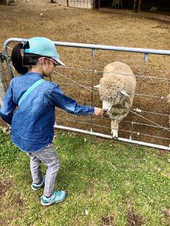 子ども,動物,屋外,かわいい,後ろ姿,帽子,羊,牧場,女の子,人物,背中,人,後姿,可愛い,小学生,ポニーテール,動物園,エサやり,餌やり,家族旅行,家畜,お出かけ,休暇,ズボン,長袖