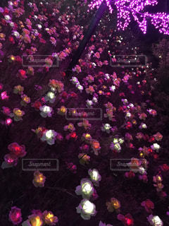 花,ピンク,カラフル,イルミネーション